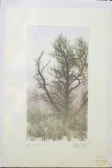 "FRANKLIN GALAMBOS HAND TINTED ETCHING  "" THICKET II """