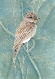 "P. BUCKLEY MOSS GICLEE "" EASTERN WOOD-PEWEE """