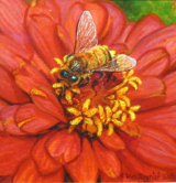 "WES SEIGRIST "" HONEY BEE ON ZINNIA """