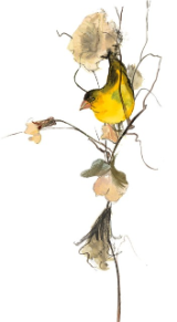 "P. BUCKLEY MOSS GICLEE "" PERFECT PERCH """