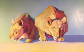 "BOB RANSLEY "" LIONESSES """