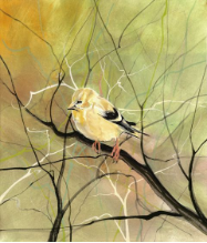 "P. BUCKLEY MOSS GICLEE ON PAPER "" THE GOLDFINCH """